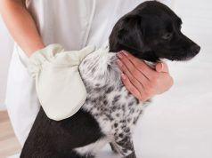 Mejores mitones Preparación del perro