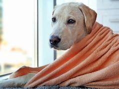 ВїCuГЎl es la mejor Toalla para perros?