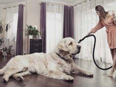 Aspiradora mejores para el pelo del animal doméstico para limpiar fácilmente sus perros de pelo Shed