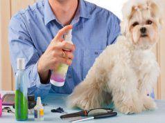 CГіmo utilizar la mejor colonia y desodorante perro para los perros?
