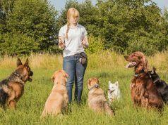 Mejores Trabajos para los dueños del perro Apasionado