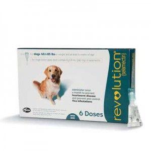 Tratamiento Mejor pulga del perro RevoluciГіn