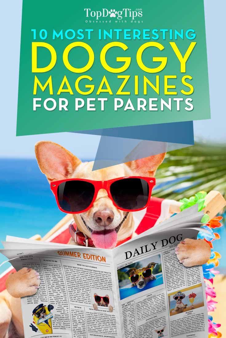 Mejores Revistas del perro para los dueños de mascotas