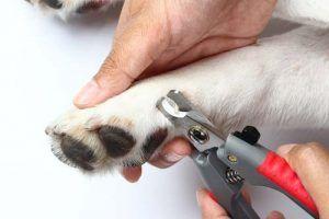 Mejores cortauГ±as para perros Cuidado de uГ±as