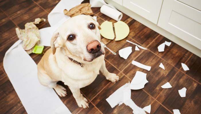 Las mejores fuentes del perro para la soluciГіn de problemas del comportamiento del perro malo