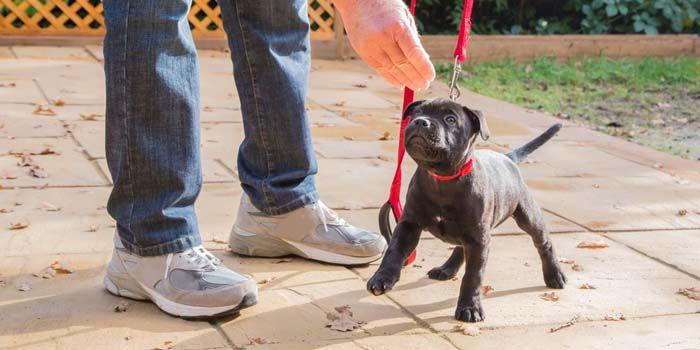 consejos de entrenamiento del perrito y corregir problemas