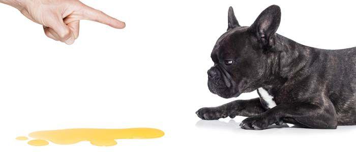 los problemas de formaciГіn de cachorro pis