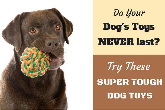 10 Mejores más duros, juguetes para perros duraderas para los masticadores pesados