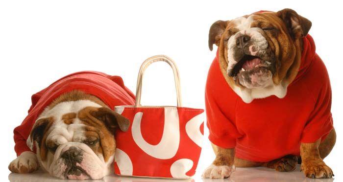 10 loco único del perro Suministros padres de mascotas Compra sus perros