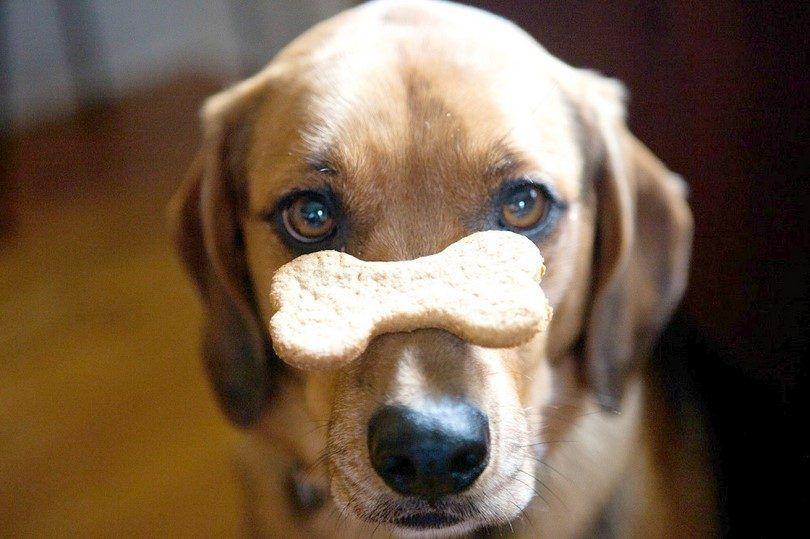 10 Recetas de galletas para perros para su mascota