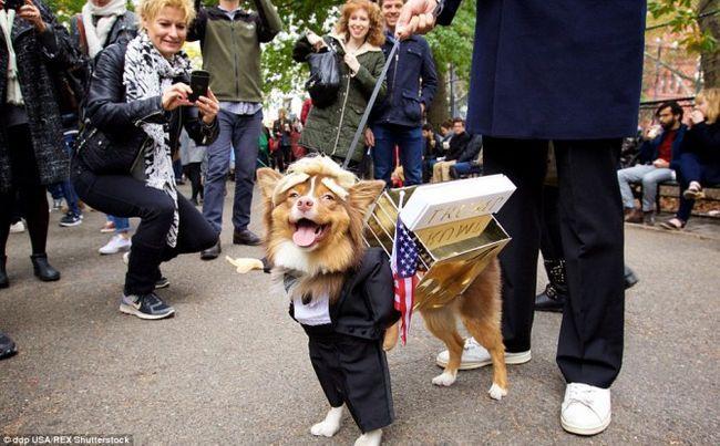10 Perros vestidos como candidatos presidenciales donald trump y hillary clinton!