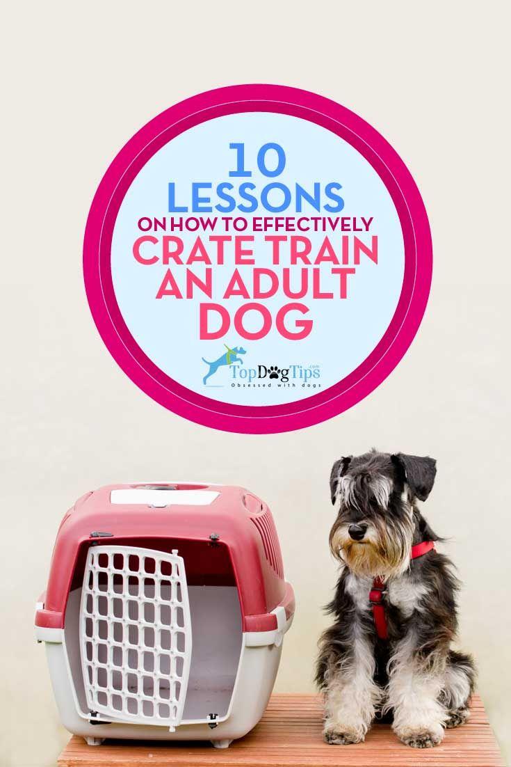 Mejores Lecciones sobre la eficacia del cajón del entrenamiento del perro adulto