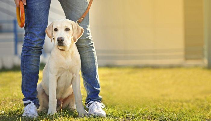 Razones para correa a su perro