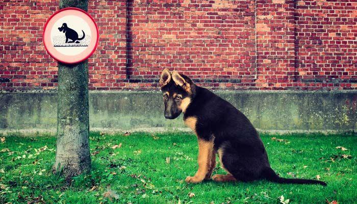 Perro caca en cualquier lugar - Razones para correa a su perro