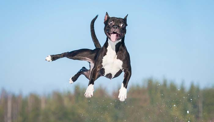 Los perros pueden ser impredecibles - Razones para correa a su perro