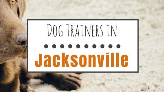 10 Entrenadores de perros de buena reputación en jacksonville, fl