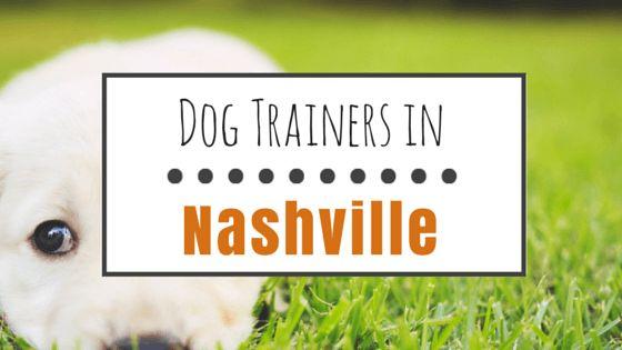 10 Entrenadores de perros de buena reputación en nashville, tn