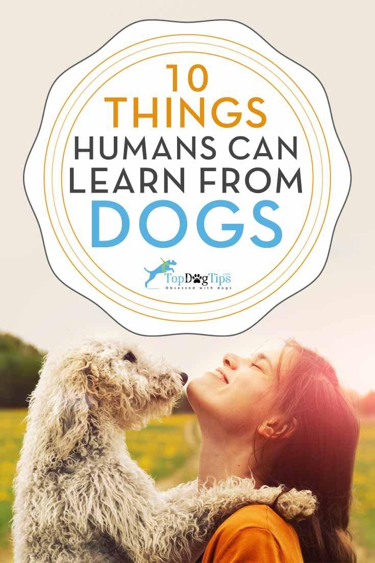 Lo que los seres humanos aprenden de perros