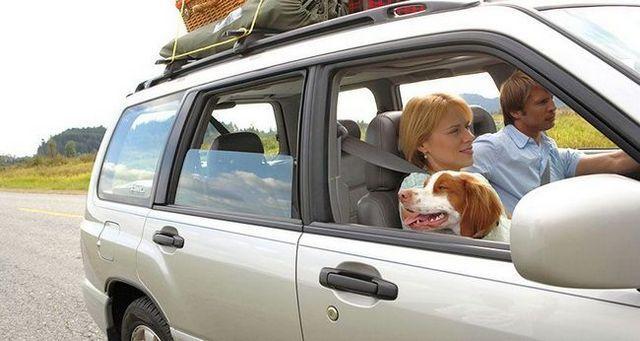 10 Consejos para viajes por carretera épicas con su perro