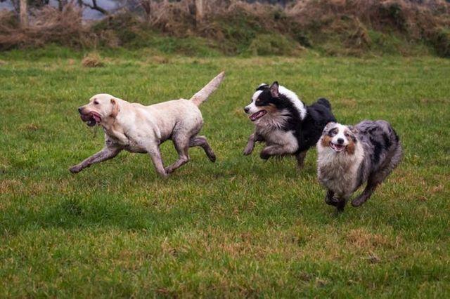 10 Consejos para mantener a su perro de tiempo de juego divertido y seguro