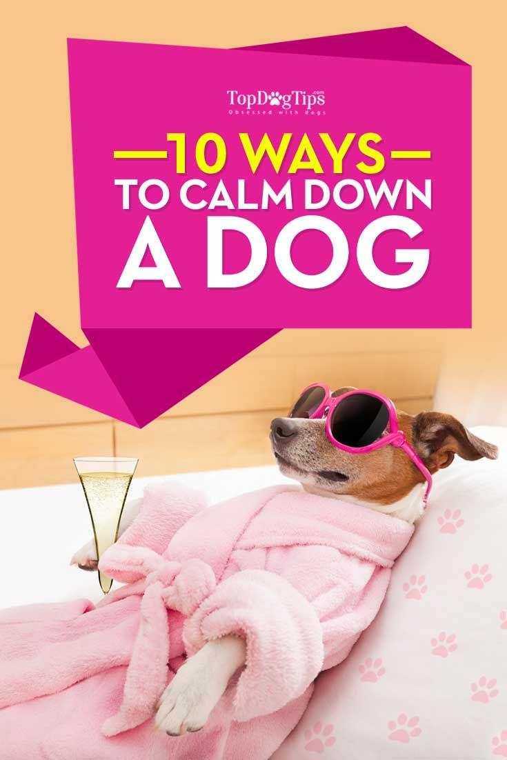 Cómo calmar a un perro
