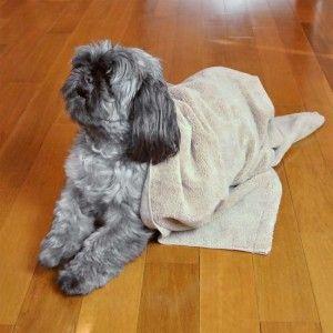 Regalos totalmente impresionantes para los amantes del perro y del propietario 1