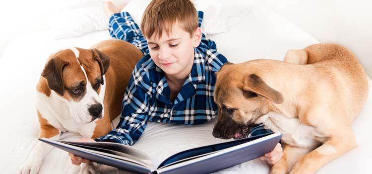Los mejores regalos para los amantes del perro