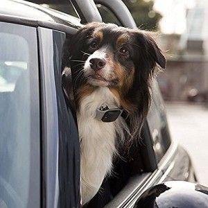 Regalos totalmente impresionantes para los amantes y dueГ±os de perros