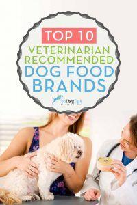 Top Vet Dog Food Brands Recomendado