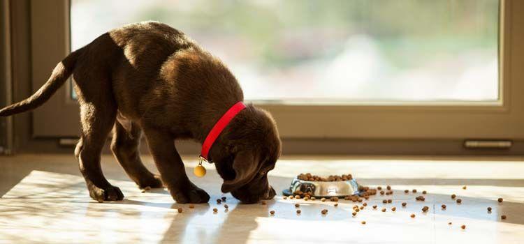 Vet Dog Food Brands Recomendado