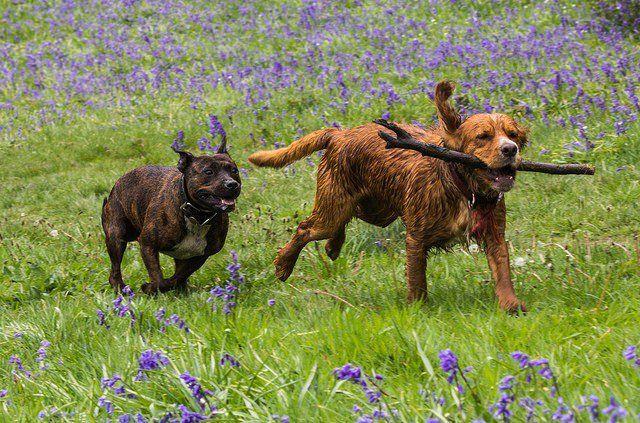 Los dueños del perro maneras puede ir verde y respetuoso del medio ambiente