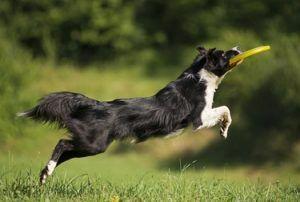 Razas de perros peores para primeros propietarios de tiempo