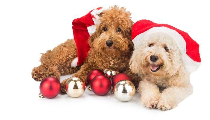Perro de la Navidad Adornos de Seguridad