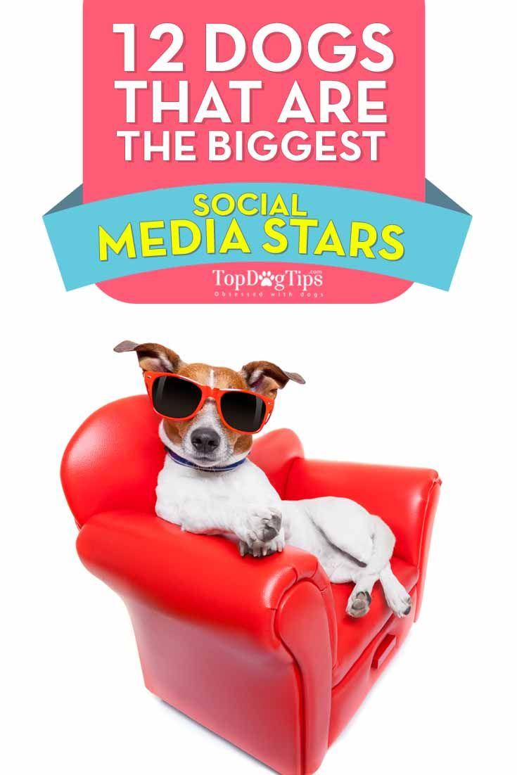 Los perros que son los mayores Social Media Estrellas