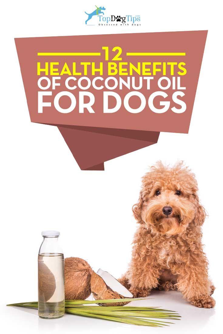 Mejores beneficios para la salud del aceite de coco para perros
