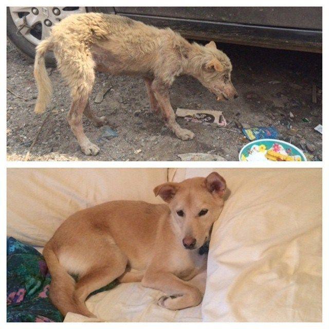 12 Historias de rescate de perros increíbles
