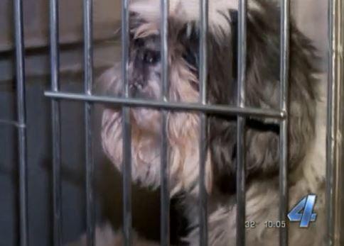 124 Perros incautados a fábrica de cachorros de la ciudad de oklahoma