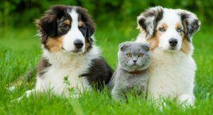 Los mejores perros para gatos