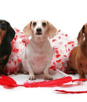 14 Diversión Valentine`s Gifts for Dogs