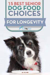 Las mejores opciones Perro mayor de alimentos para la longevidad
