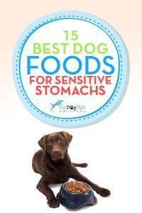 Mejor estГіmago sensible alimentos para perros para los malestares estomacales