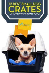 Mejor Cajas Pequeño perro para cachorros o perros pequeños