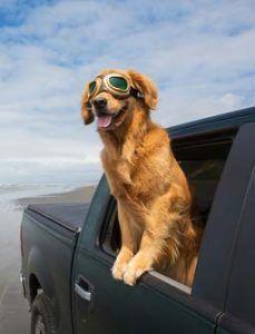 CГіmo viajar con perros en los coches de forma segura