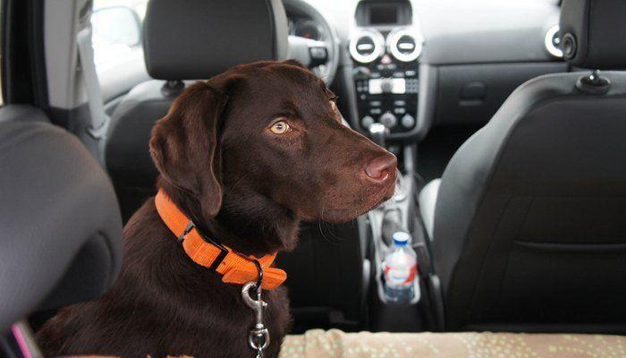 Viajar con perros en los coches