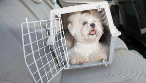 portadores del perro y cajas de perro son mГЎs seguros