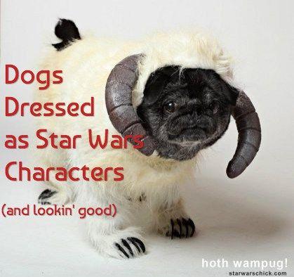 15 Perros vestidos como personajes de star wars