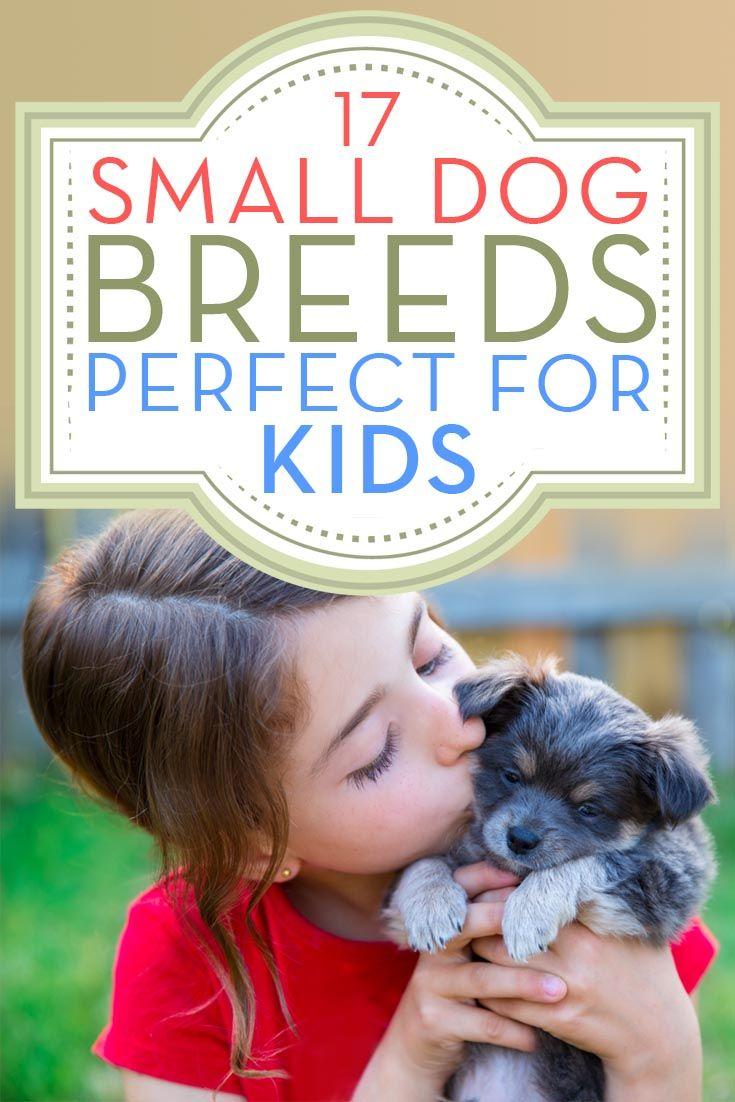 Razas de perros pequeños que son buenos con los niños