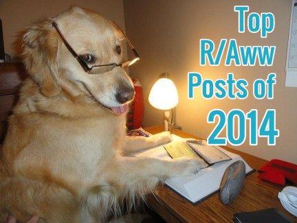 Top 19 r / fotos todos de 2014