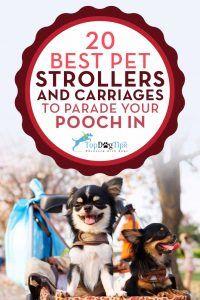 Los mejores cochecitos del animal doméstico y los carros para perros