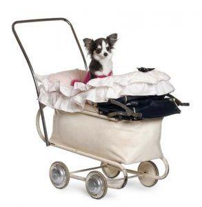 Los mejores cochecitos para perros y Carruajes para los animales domésticos